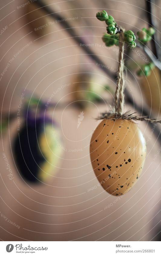 zuspätkommer Pflanze Blüte Wärme Ostern Osterei Blumenstrauß Dekoration & Verzierung Schmuck Ei gepunktet Feder braun Tradition hängen Farbfoto Detailaufnahme