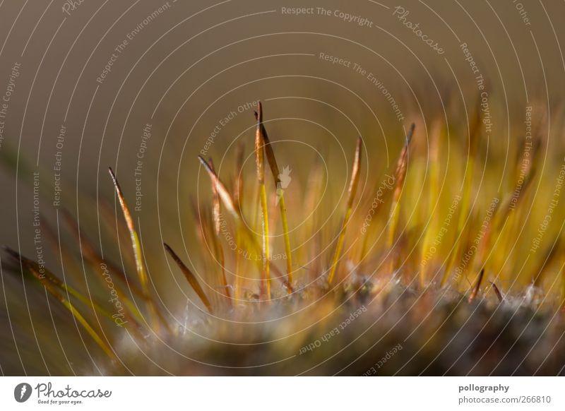 Zusammen ist man weniger alleine Umwelt Natur Landschaft Pflanze Erde Sand Frühling Schönes Wetter Gras Moos Blatt Blüte Grünpflanze Wildpflanze Felsen braun