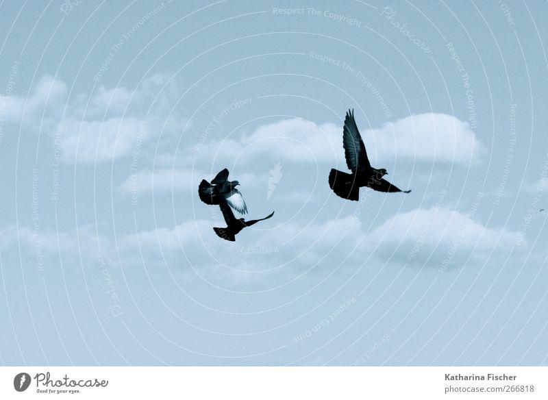 Fly birds fly Himmel Natur blau weiß Sommer Tier Winter Wolken schwarz Herbst Frühling Freiheit Luft Vogel fliegen Urelemente