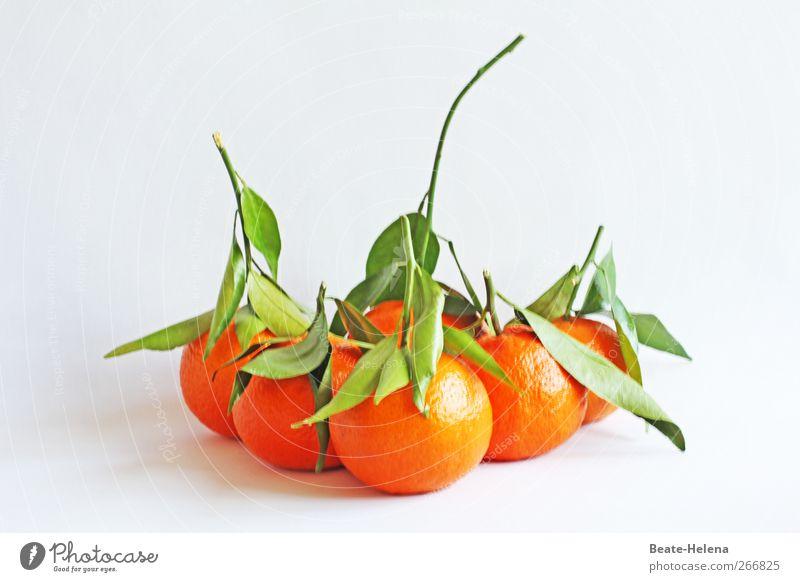 Orangement Lebensmittel Frucht Gesundheit Gesunde Ernährung Pflanze Nutzpflanze Mandarine Südfrüchte Diät füttern genießen Erotik frisch gelb Lebensfreude Glück