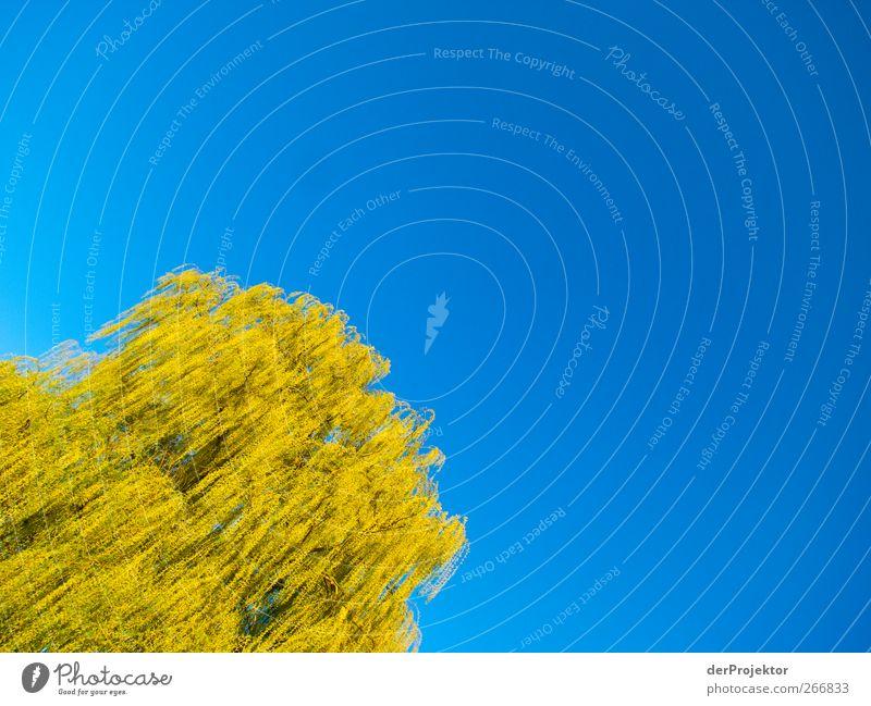 Gelbe Luftqualle Umwelt Natur Sonne Schönes Wetter Baum Garten Park elegant schön blau gelb grün Trauerweide Farbfoto Textfreiraum rechts Textfreiraum oben Tag