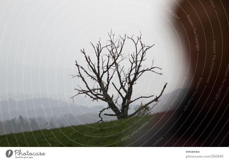 Baumgrenze Mensch Kopf 1 Umwelt Natur Landschaft Himmel Wolken Klima Wetter Pflanze Park Feld Hügel Berge u. Gebirge alt trist Tod Schwarzwald