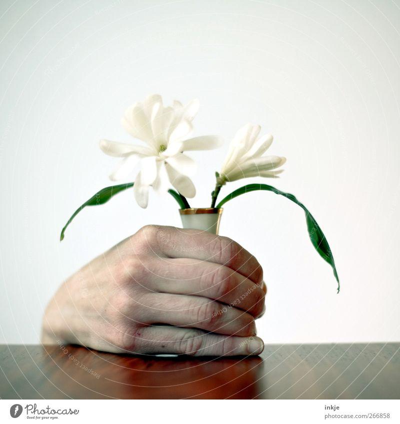 Magnolien für Vatti Mensch Hand weiß Blume Gefühle Stimmung Feste & Feiern Freizeit & Hobby Geburtstag Häusliches Leben festhalten Mitte Blumenstrauß verstecken