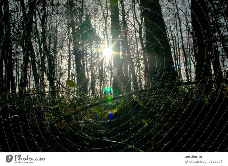 Waren/Müritz Umwelt Natur Landschaft Pflanze Sonne Sonnenlicht Frühling Winter Wald dunkel Mischwald strahlend blenden Farbfoto Gedeckte Farben Außenaufnahme