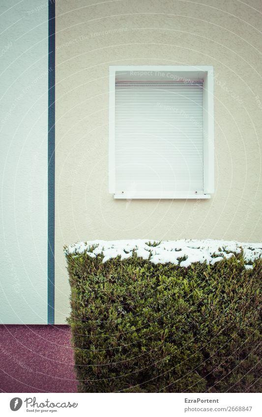 Single Winter Schnee Pflanze Sträucher Haus Bauwerk Gebäude Architektur Mauer Wand Fassade Fenster Linie kalt grau grün Rollladen geschlossen einzeln Hecke