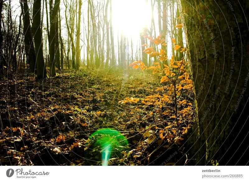 Wald Umwelt Natur Landschaft Sonnenlicht Frühling Winter Klima Klimawandel Wetter Schönes Wetter Park Wiese träumen Unterholz Müritz Naturschutzgebiet Farbfoto