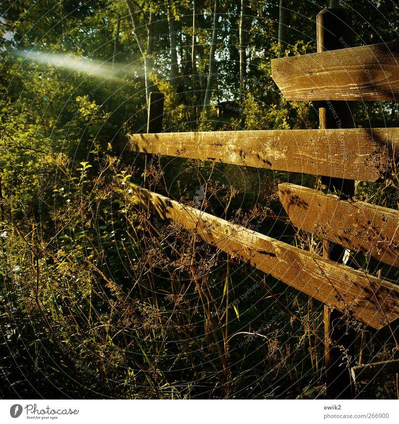Morgens am Zaune Umwelt Natur Landschaft Pflanze Klima Wetter Schönes Wetter Wärme Gras Sträucher Garten Wald Smaland Nordeuropa Bauwerk Einfriedung Begrenzung