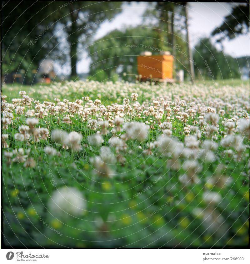 sumsenparadies Natur Pflanze Tier Umwelt Wiese Gras Frühling Blüte natürlich Garten Park Freizeit & Hobby glänzend Lifestyle Klima Schönes Wetter
