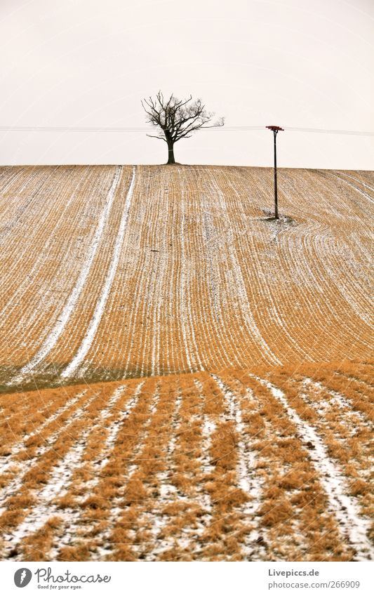 Krakow am See 3 Himmel Natur Baum Pflanze Winter Umwelt gelb Landschaft grau Wetter Feld Energiewirtschaft