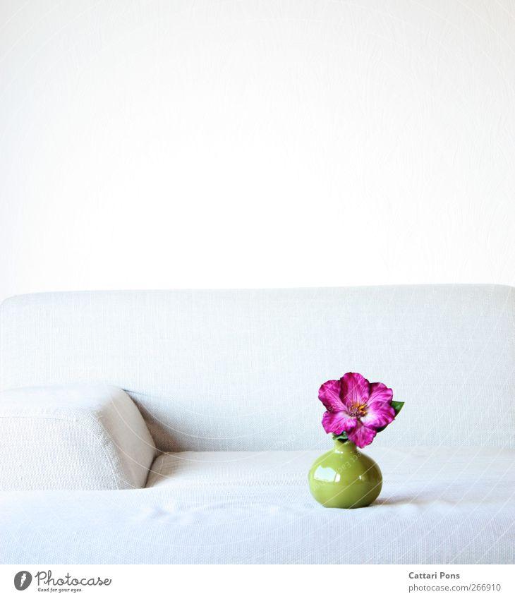 WohnDesign grün schön Pflanze Blume Farbe Stil hell Raum Wohnung elegant Häusliches Leben stehen Dekoration & Verzierung violett Umzug (Wohnungswechsel)