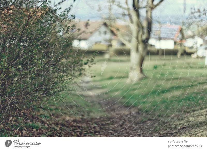 Der Weg vor der Siedlung Natur Landschaft Pflanze Schönes Wetter Gras Sträucher Garten Park Dorf Kleinstadt Menschenleer Haus Einfamilienhaus Stadt Solarzelle