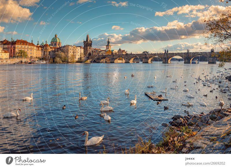 Blick auf Prager Altstadt mit Karlsbrücke Weitwinkel Starke Tiefenschärfe Außenaufnahme Farbfoto Neobarock Strakova Akademie Idylle Horizont mehrfarbig schön