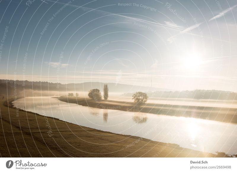 Nebeliger Sonnenaufgang im Elbtal in Dresden Umwelt Landschaft Himmel Sonnenuntergang Herbst Baum Gras Wiese Flussufer Elbe Kulturlandschaft ästhetisch schön