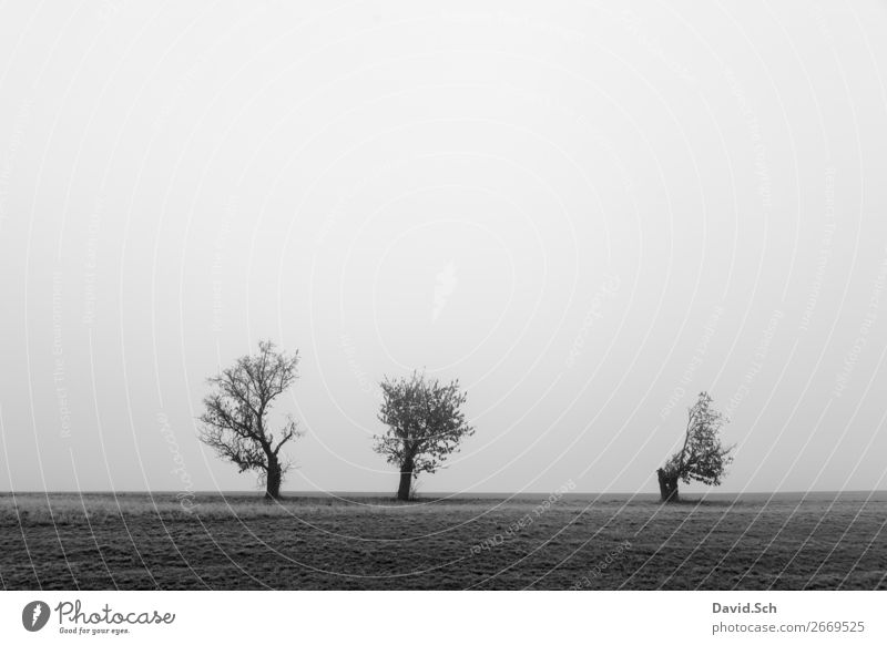 Bäume im Nebel Umwelt Natur Landschaft Himmel Herbst schlechtes Wetter Baum Wiese Feld dunkel grau schwarz Gefühle Stimmung Traurigkeit ruhig Einsamkeit