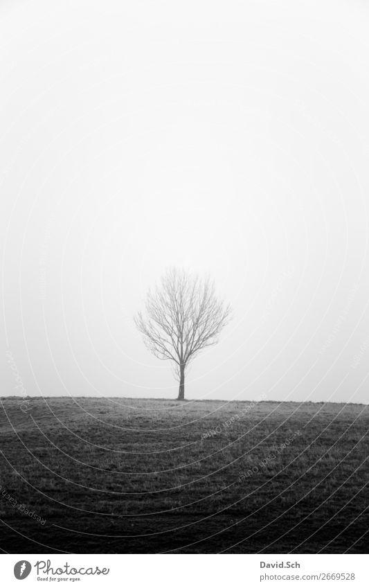 Baum im Nebel Umwelt Natur Landschaft Himmel Herbst schlechtes Wetter Wiese Feld Hügel dunkel grau schwarz Gefühle Stimmung ruhig Traurigkeit Einsamkeit