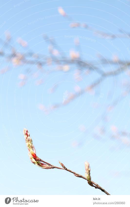 Senkrechtstarter ruhig Valentinstag Muttertag Hochzeit Geburtstag Taufe Pflanze Himmel Frühling Schönes Wetter Baum Sträucher Blatt Blüte Grünpflanze