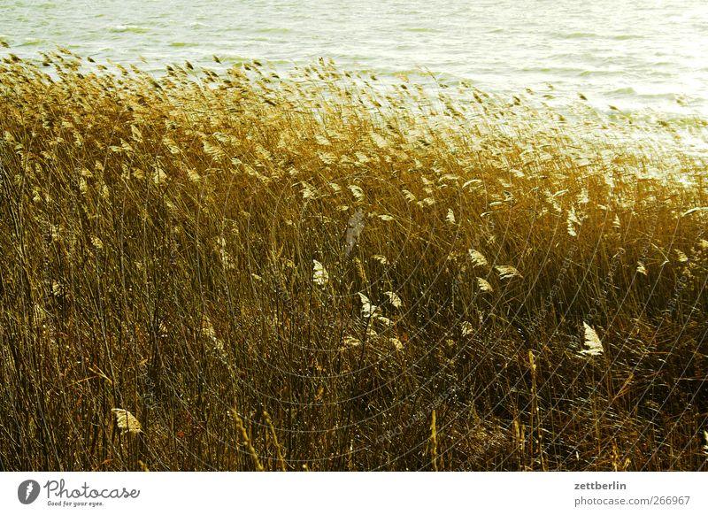 Müritz again See Küste Seeufer Schilfrohr Riedgras Brandenburg Wellen Wind Natur Landschaft Herbst Winter Ausflug Saison Umwelt Sonne Wetter Schönes Wetter