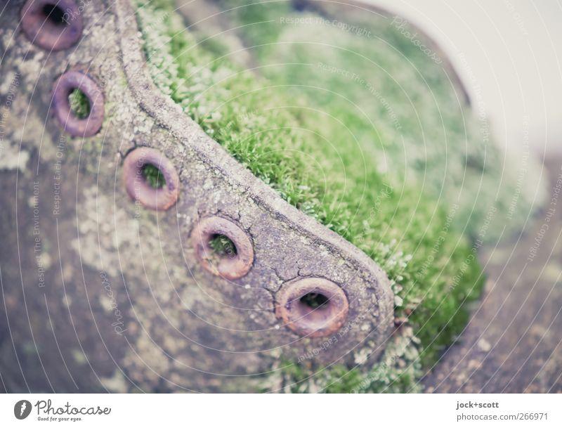 Schuh Ma Zu alt grün Stil braun Kunst Lifestyle Wachstum authentisch ästhetisch Kreativität Vergänglichkeit kaputt retro nah Rost trashig