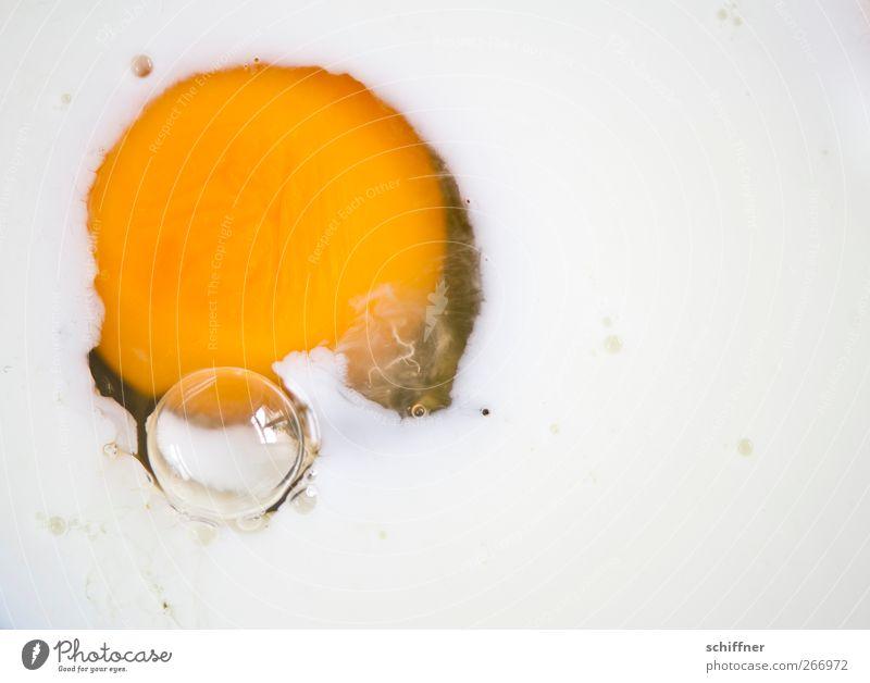 Strampelndes Ei weiß gelb Lebensmittel Ernährung rund Blase Tier Eigelb Eiklar Spiegelei
