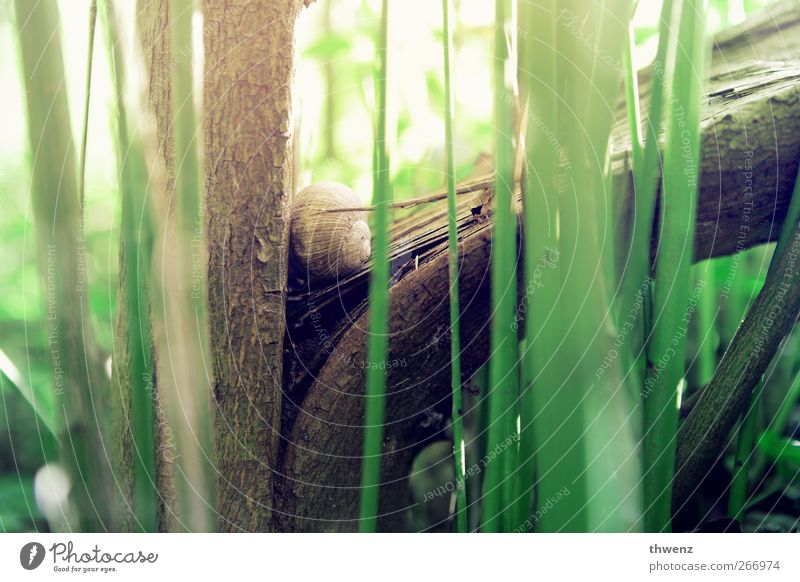Schneckenbaumhaus Natur grün schön Baum Tier ruhig Gefühle klein Stimmung braun Zufriedenheit warten liegen natürlich Beginn Häusliches Leben