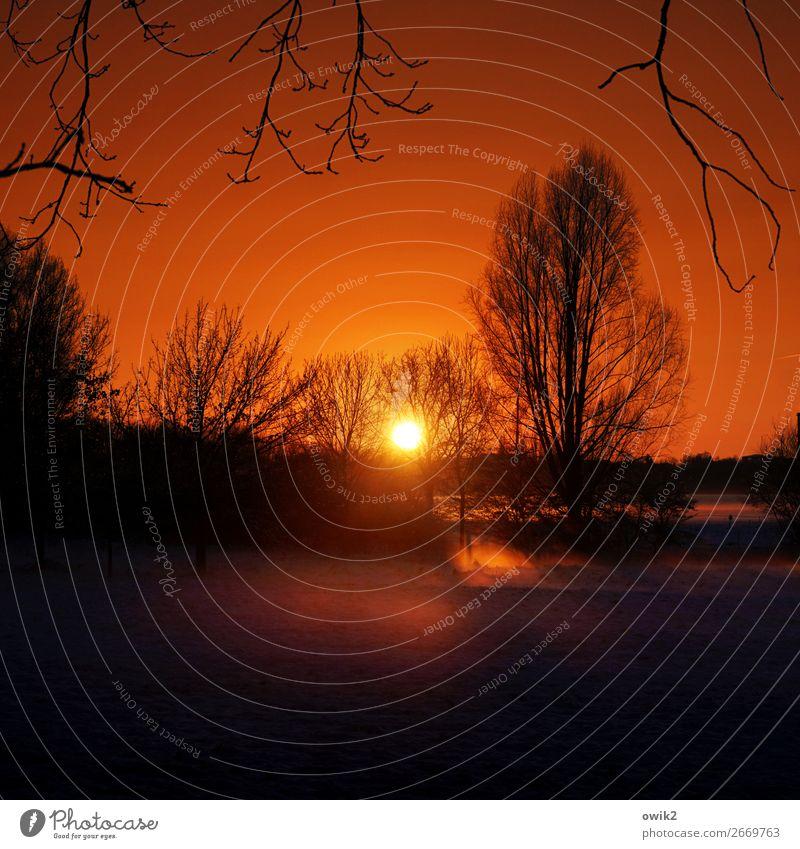 Große Oper Umwelt Natur Landschaft Pflanze Wolkenloser Himmel Horizont Sonne Winter Schönes Wetter Baum Sträucher Zweige u. Äste leuchten Gelassenheit ruhig