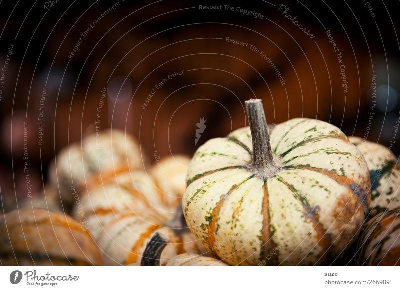 Kleiner Kürbis Herbst klein braun natürlich Lebensmittel Gesunde Ernährung authentisch Dekoration & Verzierung Gemüse Bioprodukte herbstlich Halloween