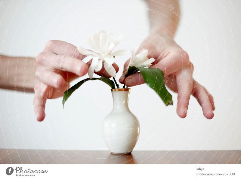Magnolien für Tante Inge Mensch Hand weiß Blume Leben Gefühle Stimmung Zufriedenheit Freizeit & Hobby Häusliches Leben stehen Dekoration & Verzierung Kreativität festhalten rein Blühend