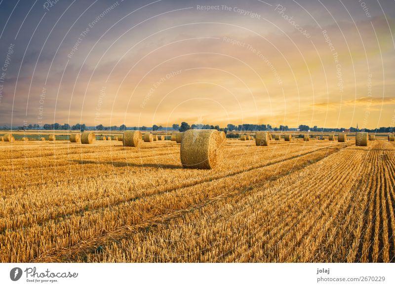 Strohballen Natur Erde Himmel Sonnenaufgang Sonnenuntergang Sommer Schönes Wetter Feld Dorf ästhetisch Freundlichkeit gelb gold orange Stimmung Farbfoto