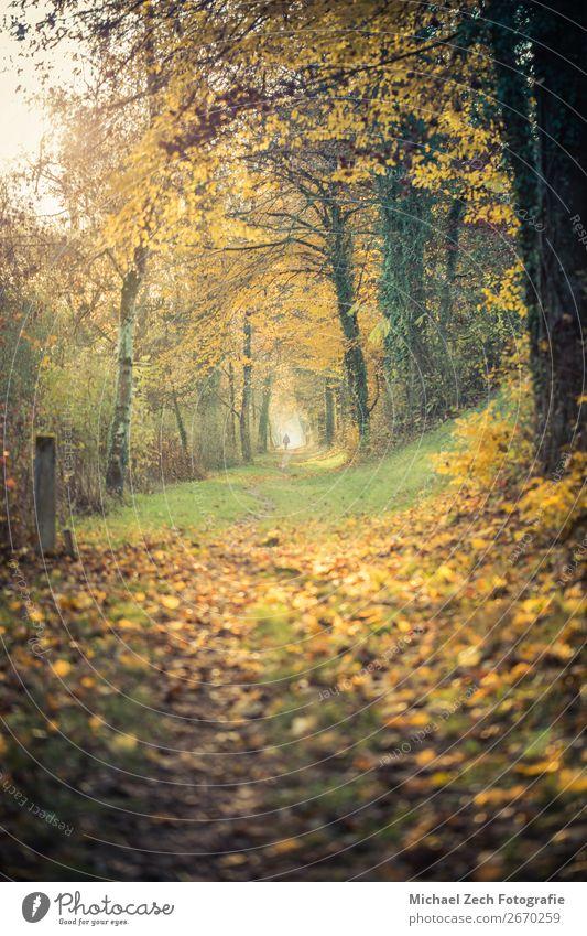 Pfad mit bunten Bäumen, die Sonne scheint im Herbst durch ihn hindurch. Leben harmonisch Ferien & Urlaub & Reisen Natur Landschaft Pflanze Erde Wetter Baum
