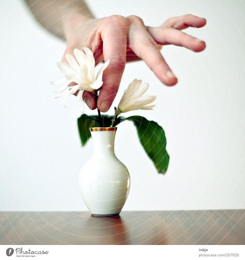 eine Magnolie für Onkel Werner Mensch Hand Blume Leben Gefühle Stimmung Feste & Feiern gold Geburtstag Häusliches Leben Dekoration & Verzierung Lifestyle