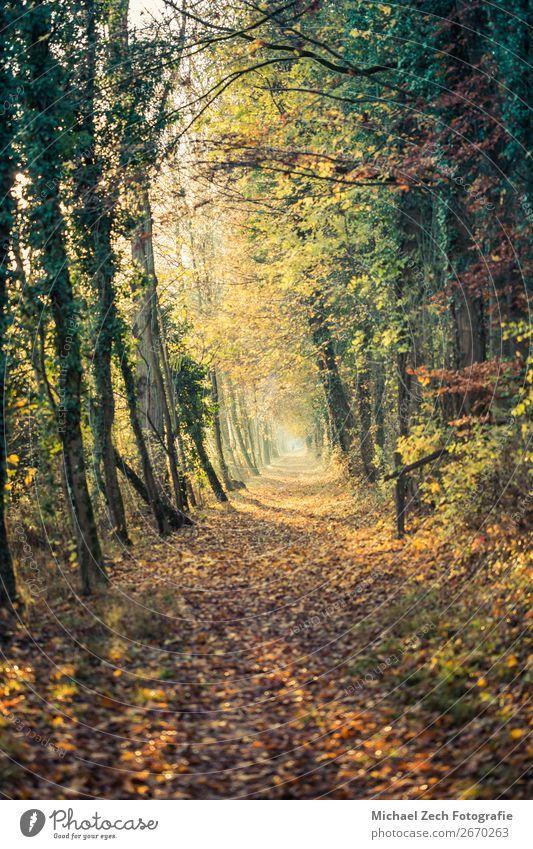 Ferien & Urlaub & Reisen Natur Pflanze Farbe grün Landschaft Sonne Baum Blume Blatt Wald Straße Leben Herbst Wege & Pfade Erde