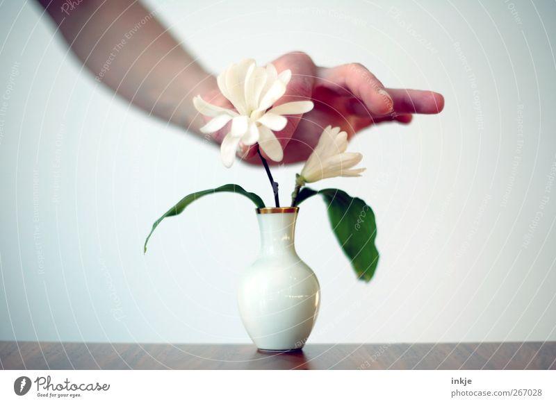 und eine Magnolie für emoji (und ihre Männer) Mensch Hand weiß schön Blume Leben Gefühle klein Stil Stimmung Feste & Feiern Freizeit & Hobby Geburtstag