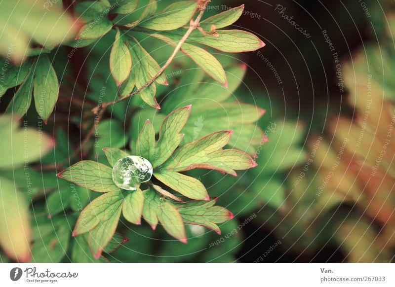 bedröppelt Natur Pflanze Wasser Wassertropfen Frühling Sträucher Blatt Garten Park braun grün Tau Eis Zweig Farbfoto Gedeckte Farben Außenaufnahme Nahaufnahme