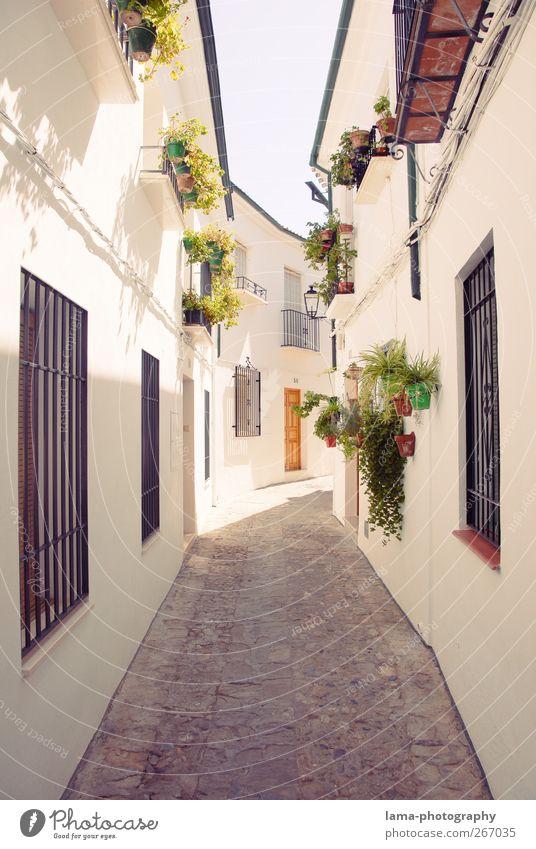 La calleja blanco [XL] Blume Topfpflanze Priego de Cordoba Andalusien Spanien Dorf Stadtzentrum Altstadt Menschenleer Haus Mauer Wand Fassade Wahrzeichen