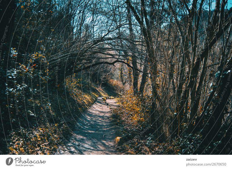 Ein Pfad durch den Wald, umgeben von kahlen Bäumen und Herbstpflanzen schön Windstille Ferien & Urlaub & Reisen Tourismus Abenteuer Berge u. Gebirge wandern