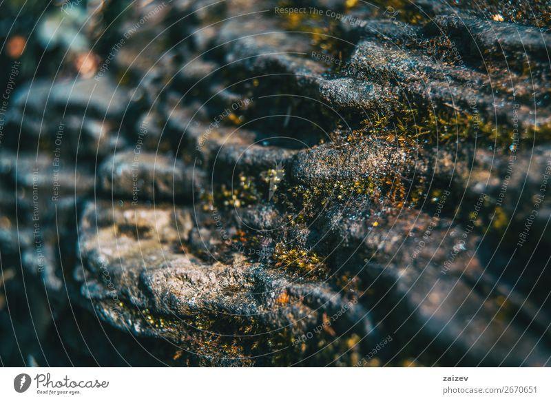 Eine Nahaufnahme eines Schichtsteins mit etwas Moos Leben Berge u. Gebirge Umwelt Natur Landschaft Pflanze Felsen Stein Wachstum klein nass natürlich grau grün