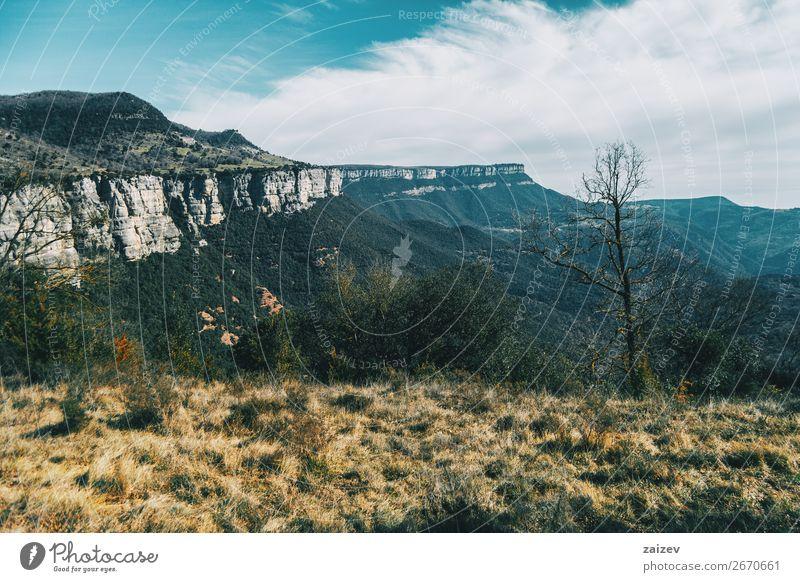 Eine große Klippe, die sich bis in den Himmel erstreckt, und ein kahler Baum auf dem Gras schön Windstille Ferien & Urlaub & Reisen Abenteuer Berge u. Gebirge