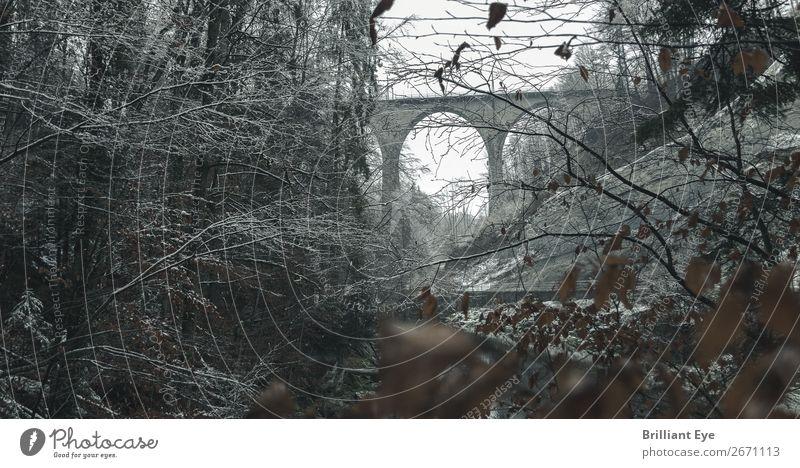 Sitterbrücke im winterlichen Morgenkleid Ferien & Urlaub & Reisen Winter Natur Landschaft Schnee Baum Blatt Wald Brücke Bauwerk Architektur kalt kuschlig Wärme