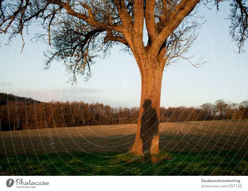 schattiges Plätzchen Natur Baum ruhig Ferne Denken träumen Stimmung Feld warten frei stehen einzigartig beobachten Neugier Schutz Vertrauen