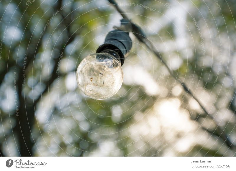 There's a light ... alt grün Baum Blatt gelb Energiewirtschaft einfach Glühbirne Südamerika Argentinien Blätterdach Buenos Aires