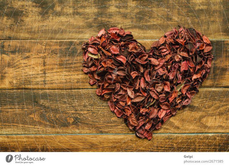 Natur Pflanze schön rot Blume Holz Liebe Blüte Feste & Feiern Dekoration & Verzierung Herz Geschenk Romantik Hochzeit Symbole & Metaphern Beautyfotografie