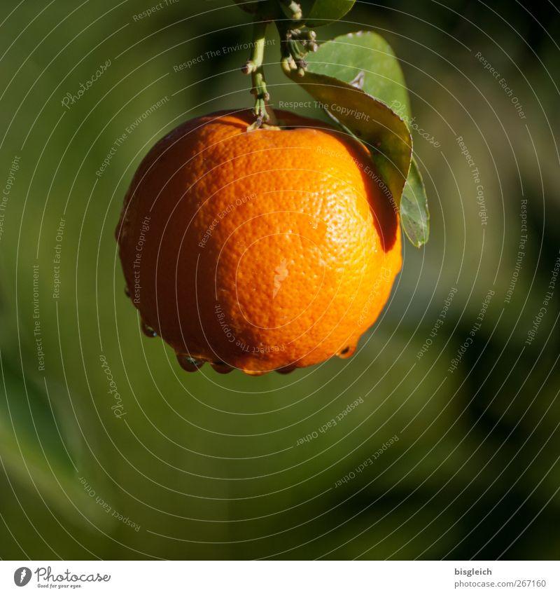 Orange grün Sommer Lebensmittel Frucht Nutzpflanze