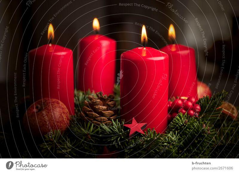 Adventskranz Weihnachten & Advent Pflanze Zeichen leuchten warten rot Stimmung Geborgenheit Hoffnung Glaube Frieden Religion & Glaube Liebe 4 Kerze Kerzenschein