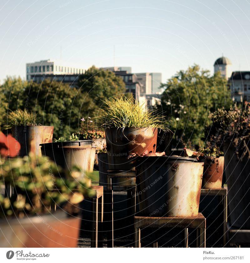 Planten un Pötte Natur grün Stadt Pflanze Sommer Blume Umwelt Wärme Gras Metall Kunst Wachstum Hamburg Sträucher Rost Skulptur