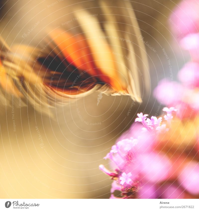Überraschend | davongeflogen Blume Schmetterling Flügel 1 Tier flattern Bewegung fliegen Geschwindigkeit gold orange rosa Begeisterung beweglich Freiheit