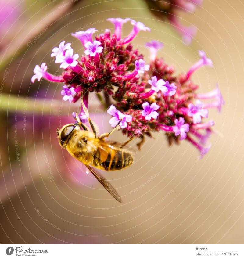 !Trash! 2018   abgehangen Blume Bienenweide Zierpflanze Arbeit & Erwerbstätigkeit Duft hängen krabbeln gold rosa Gefühle Frühlingsgefühle genießen Lebensfreude