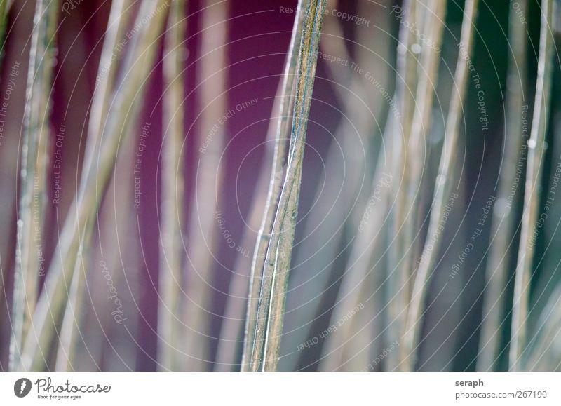 Reed Natur Pflanze Blatt Wiese Gras Hintergrundbild frisch Wachstum weich Kräuter & Gewürze Tapete Schilfrohr Halm Stapel Grasland Botanik
