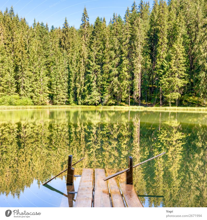 Waldsee in den Bergen schön Erholung Ferien & Urlaub & Reisen Sommer Sommerurlaub Sonne Berge u. Gebirge Umwelt Natur Landschaft Pflanze Wasser Himmel