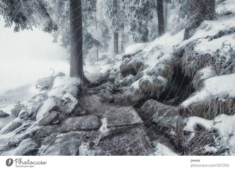 Step Stone Natur Winter schlechtes Wetter Nebel Eis Frost Schnee Baum Wald Berge u. Gebirge Seeufer Stein kalt braun schwarz weiß Idylle Klima Mummelsee