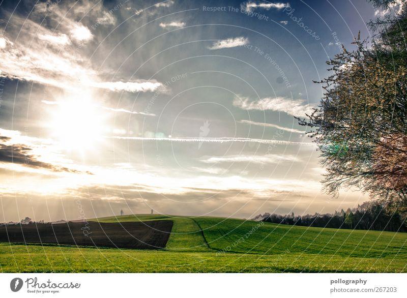 a wonderful day Himmel Natur grün Ferien & Urlaub & Reisen Baum Pflanze Sonne Sommer Wolken Umwelt Landschaft Wiese Frühling Freiheit Horizont Erde